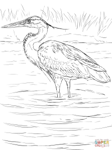 great blue heron coloring sheet